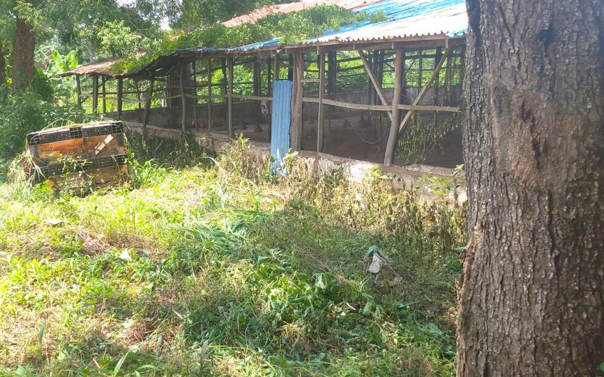 FOR LEASE:  4NO. PEN OF RANGING CAPACITY FROM 2,500 BIRDS, 5,000 BIRDS, 7,000 TO 8,000 BIRDS AVAILABLE FOR LEASE